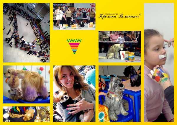 Выставка собак под эгидой кроликов
